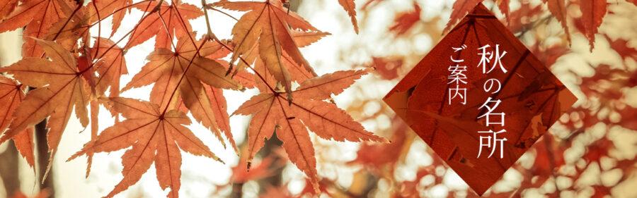 秋の見どころ