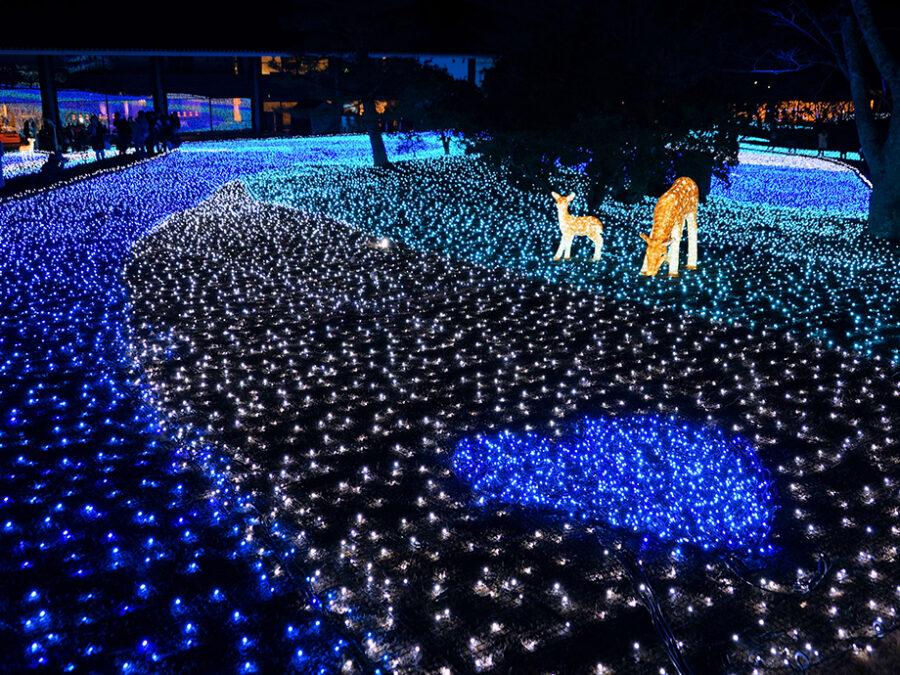 【奈良公園周辺(なら瑠璃絵)】例年2月の上旬に開催される奈良公園の一大イベント。春日大社、東大寺、興福寺の三社寺が幻想的な光の回廊で結ばれ、瑠璃色に彩られた奈良公園を散策できます。